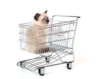 cute-kitten-sitting-shopping-cart