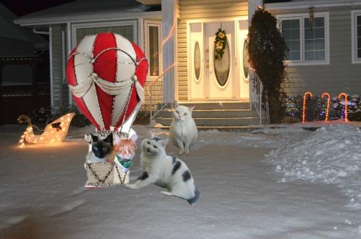 ballooncats