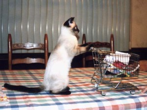 cat-and-cart