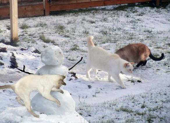 nellie-snow