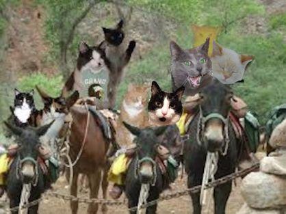 0-donkey-timmy-dora-shoko-einstein-felix-maggie-buddy-kali