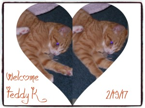 welcome-teddy-k-pizap-com14869240629731
