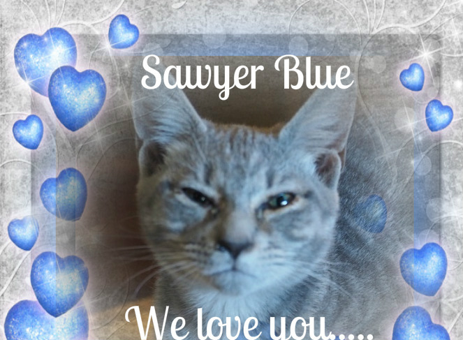 Purrs fpr Sawyer Blue
