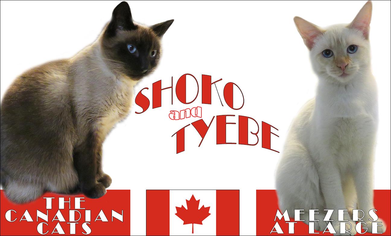shoko and tyebe